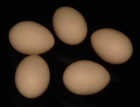 Latex Egg Brown